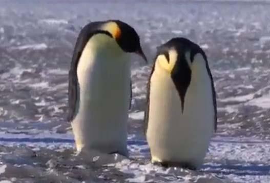 Нарезка Забавных Фейлов Пингвинов